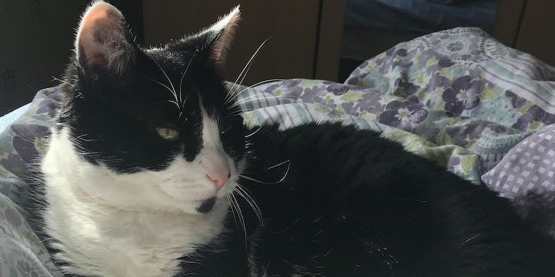 Can you help find missing cat in Sherford