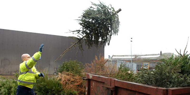 christmas tree collection in taunton