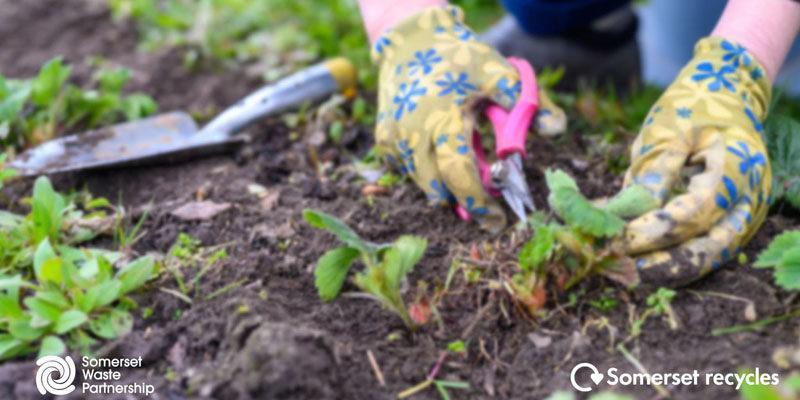 garden waste image tone news